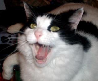 """Let's do it in a round now ... """"Soft kitty, warm kitty, little ball of fur ... happy kitty, sleepy kitty, purr, purr, purrrrrrrr."""""""