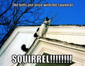 SOMsquirrel