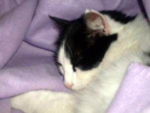 So innocent when he's sleeping ...