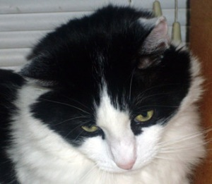 I prescribe one 18-pound cat on your chest, three times a day. You'll be better in no time!