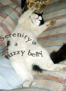 The inspiration for Serenity is a fuzzy belly. Belly rubs available on demand. (His, not yours.)
