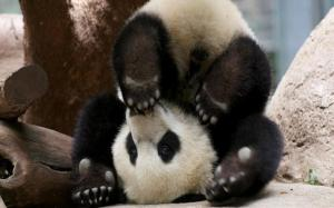 Upside down you're turnin' me ... Image from AnimalPlanetGallery.