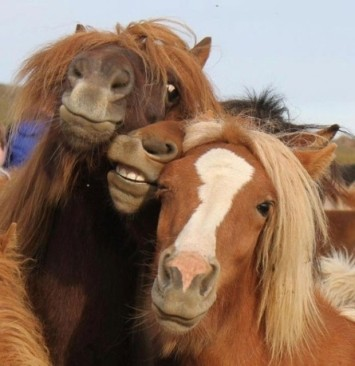 Stop horsin' around? Yeah, like that'll happen. Image from distractify.com.