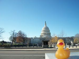 Rubber duckie, you're the one ... Image from Quinnarama.