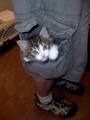 I don't like cargo pants, but if they came with cute kittens in the pockets, I might change my tune.  Image from Catster.