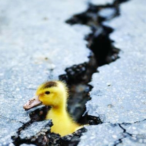 Earth quack!!!!!! Image found on RoosterTeeth.com.
