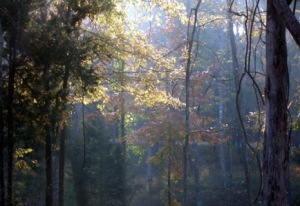 Light beams through fall trees at Burns Park.