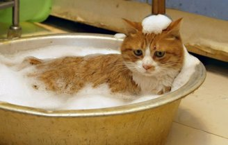 cat_in_bath12