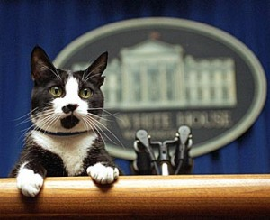 If Socks was still alive, I'd vote for him. His decisions would probably make more sense than most politians'. AP photo by Marcy Nighswander.