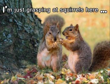 Photo of Autumn Squirrels by Susan Schwarting.