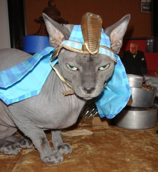 How do you make an already kinda-creepy-looking cat even creepier? This. Image found on Cutestcatpics.