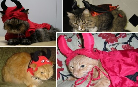 I'm fairly sure all these cats are planning on sending their people straight to Hell. Image found on Idealpetstuff.com.