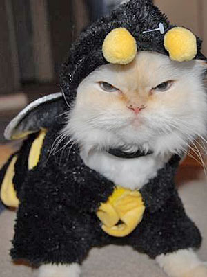 You'd best beware my sting if you know what's good for you. Image found on Cute-n-tiny.