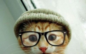 Even Hipster Cat thinks this is a bad idea. Image found on HerCampus.