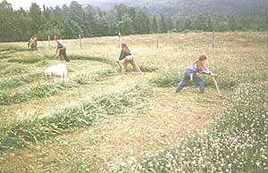 Actual swaths of grass cut by a scythe; imagine that! Image found on Scythe Connection.