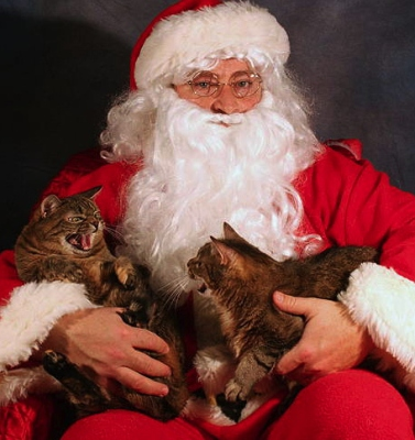 I'll show YOU Santa Claws! (Yes, they're not in costume, but c'mon.) Image found on BuzzFeed.