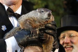 Groundhog Day Groundhog Club handler holds Punxsutawney Phil, the weather prognosticating groundhog, during the 129th celebration of Groundhog Day on Gobbler's Knob in Punxsutawney, Pa. Monday, Feb. 2, 2015. Image by Gene J. Puskar, The Associated Press.