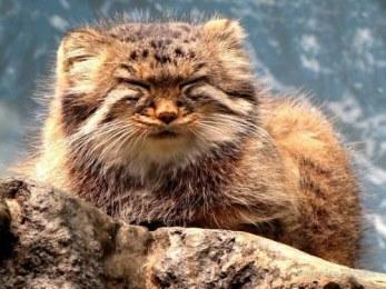 I am one with my fuzziness. Image found on BuzzFeed.