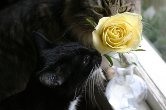 See, Sergei? If you stop and smell the roses, the humans will think it's so cute they'll forgive you for ANYthing! Image found on musicandcats.