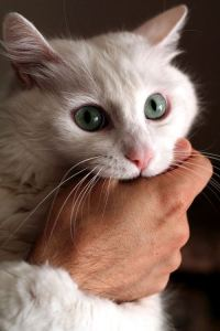 Sweetie, you'll have to learn not to bite the hand that feeds you. That's my can-openin' hand! Image found on CatsTheBoss.