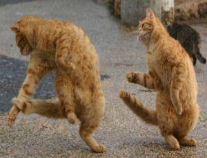 Bust a move! Image found on Memekid.