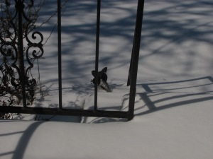That little dot is the head of my welcome cat ... that's all that wasn't covered in ice, sleet and snow on Thursday.