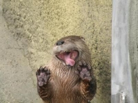 "Perhaps the otter's not ""blessed,"" but he certainly is silly (and adorable). Image found on Cutest Paw."