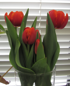 Things like this help, too ... a reader brought me these beautiful tulips last week (awww!).