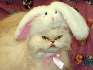 Oh, no, no ... kitty is not a happy Easter bunny. Image found on Becuo.