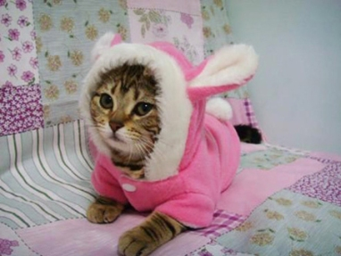 Showing you why a onesie on a cat is a bad idea in 3, 2, 1 ... Image from Hercampuslife.