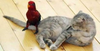 Did I tell you to sit there, birdbrain? Image found on Only Funny Images.