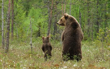 Son, let's go to the woods to do what bears do ... and bring the toilet paper! Image found on The Kind Life.