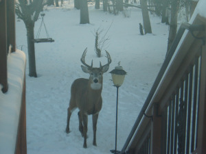 Pardon me, but can I borrow a cup of deer corn? Photo found on BudgetSmartGirl.
