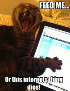 You think I'm kidding, human? I know all your passwords! Image found on Stephanie's Late Night Ramblings.