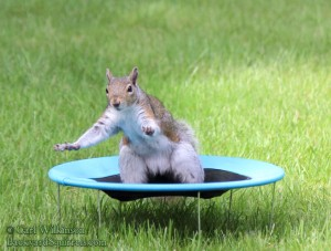Hold it, people! Settle your butts, I'm tryin' to talk here! Photo by Carl Wilkinson found on BackyardSquirrels.