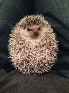 So what if I have a prickly personality? Image found on Sunlit Cafe.