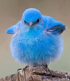 Bluebird of happiness my fuzzy blue ass! Image found on LoveThisPic.