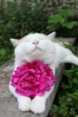 The secret to a happy cat: Worship me. No, really, worship me, dammit! Oh, and move to Japan. Image of Shironeko found on Huffington Post.