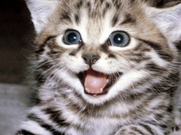 How could anyone be anything but happy looking at that face??? Image found on KittenToob.