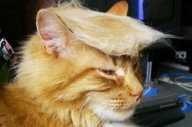 The cat would definitely make a better president ... and at least he's actually entertaining. Image found on TheOdysseyOnline.