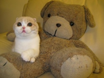 Mom, Dad, I'd like you to meet Teddy ... we're getting MARRIED! Image found on MyConfinedSpace.