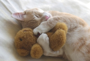 I love you, Teddy. You never steal my fishies. Image found on BuzzFeed.