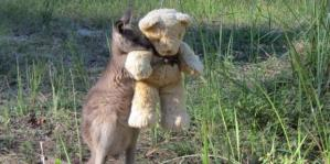 Doodlebug hugs his teddy in this photo posted by Tim Beshara on Twitter.
