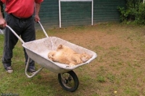 Word of advice, dude: If you value your life, don't tump that wheelbarrow. Image found on Buzznet.