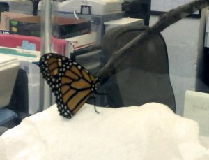 Looks like that Monarch's about ready to take the editing chair ...