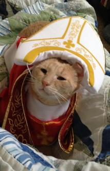 Buster, spokescat for FURR is ready to absolve you of your sins! Image from FURR Facebook page.
