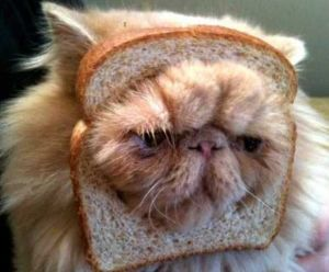 "Pure-""bread"" cat? Dude, you're not even tryin'! Image found on Business2Community."