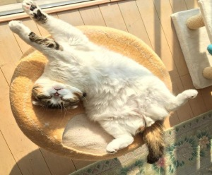 Relax ... everything will look better after a nap in the sun. Image found on RocketNews.