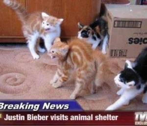Please, save the kitties from the Biebs and adopt! Image found on MemeGuy.