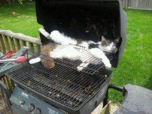 Fluffy decided he would never again miss out on barbecued brisket. Image found on Distractify.